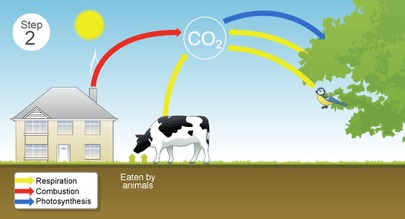 The carbon cycle steps the carbon cycle ccuart Choice Image